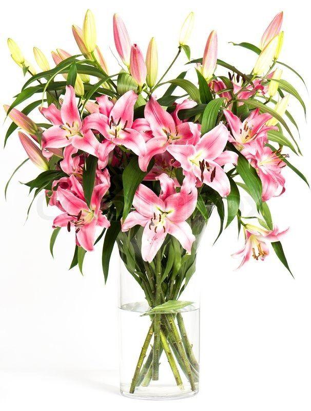 S 229 Dan V 230 Lger Du Den Rigtige Blomst Dagligvarernettet