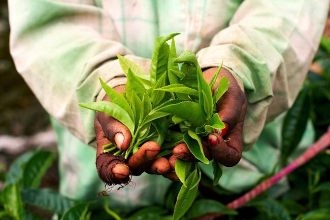 Produktionen af fairtrade chokolade