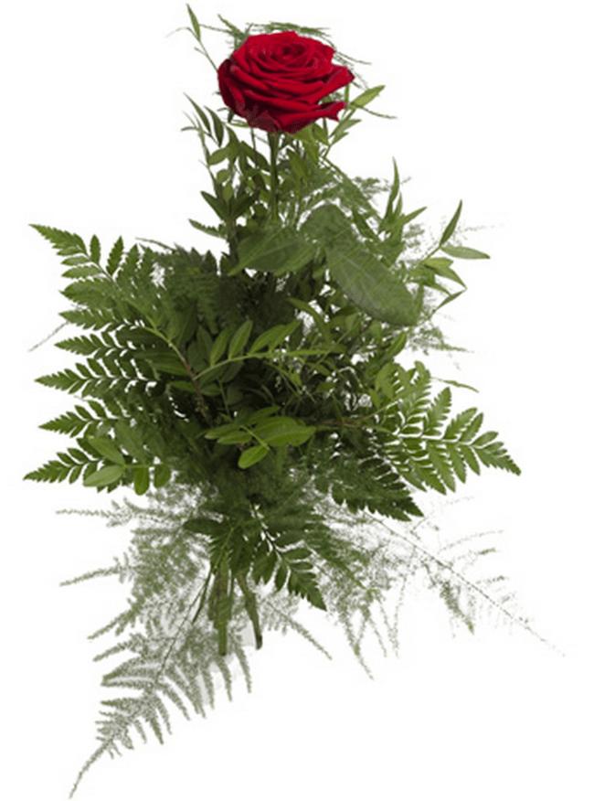 Enkelt rød rose